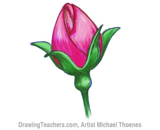 How To Draw A Rosebud Rose Buds Rose Painting Flower Drawing