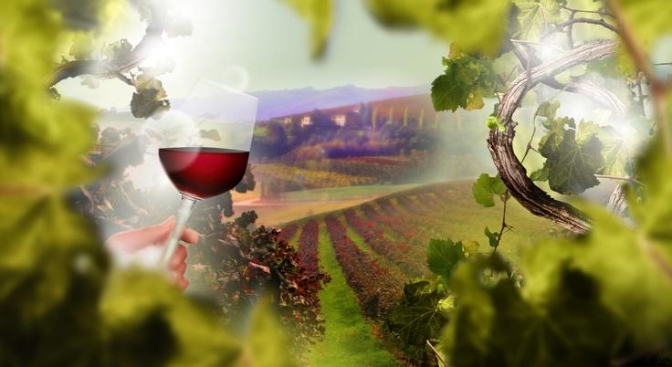 Manicardi vini
