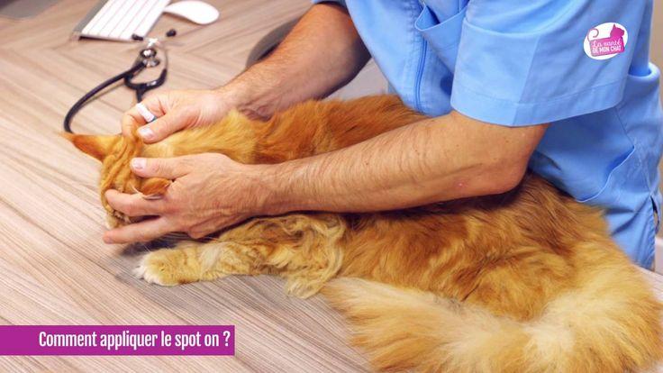 Gaspard interroge son vétérinaire sur le spot-on, un traitement contre les parasites du chat (puces, tiques...). Qu'est-ce qu'un spot-on ? Où l'appliquer ?  Retrouvez encore plus d'informations sur la santé et le bien-être de votre chat sur www.lasantedemonchat.fr