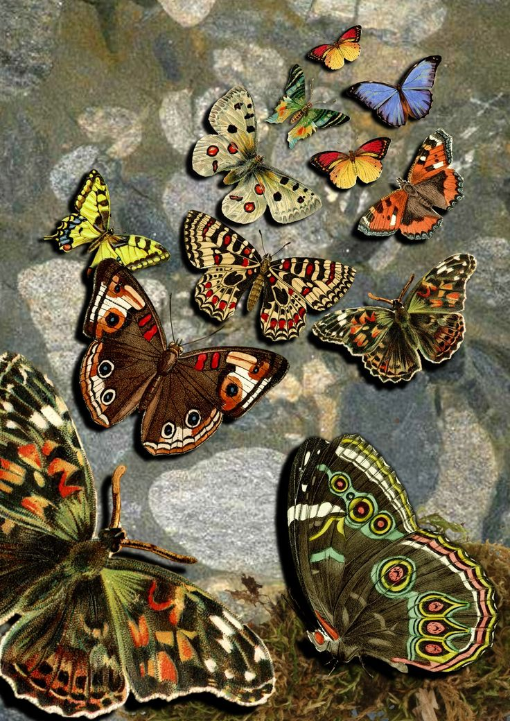 This was one of my first Serif Craft Artist projects - digital butterfly collage using Royalty Free images - #MyFavouriteMakes
