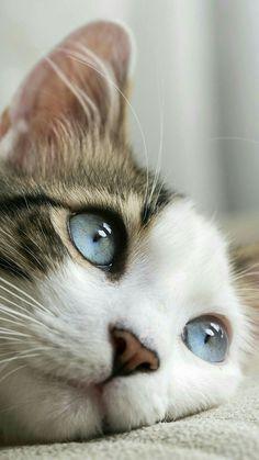 A quoi rêves-tu. Petit chat ?