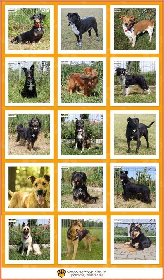 Zobaczcie, ile zwierzaków znalazło ostatnio dom dzięki Wam!