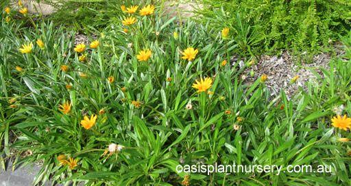 162 Best Images About Plants Ideas Brisbane On Pinterest