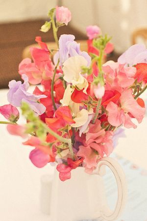 Sweetpeas would love to have these somewhere in my wedding as its my grandpas favourite flower and grew them constantly