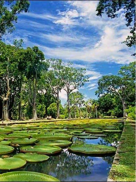 SSR Botanical Garden, Mauritius: - PixoHub