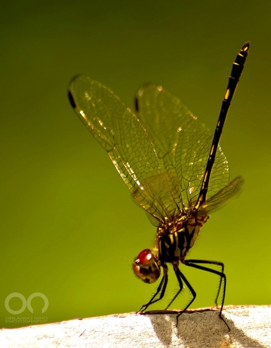 Dragon Fly...                                                                                                                                                                                 More