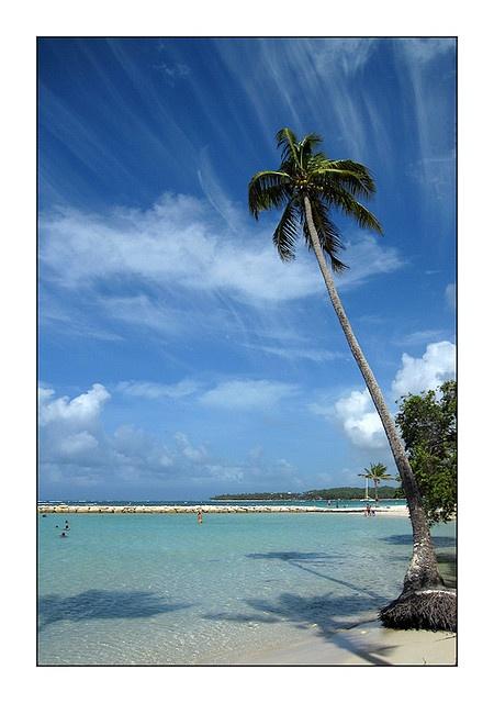 Plage de Saint Anne Guadeloupe by Me #westindies #guadeloupe #beach