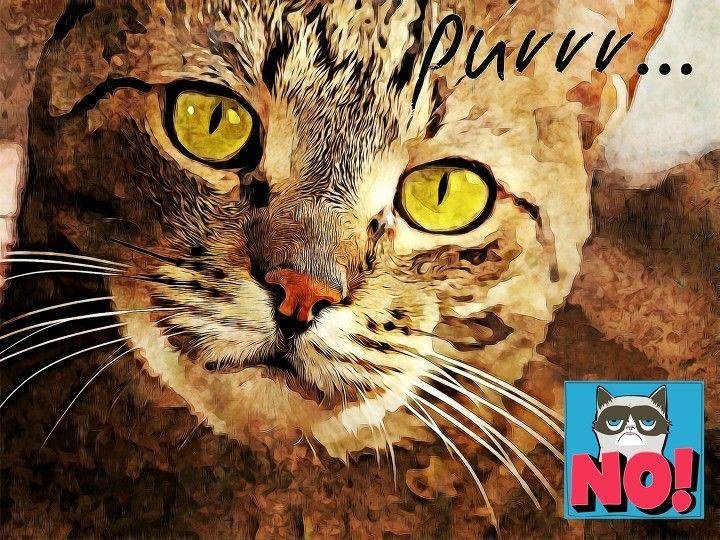 NO :) cat, funny