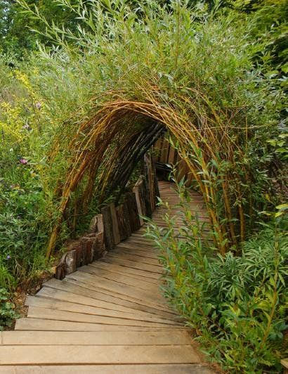 Living tunnel garden path Love to have this as a gateway to the woods next to the maple tree