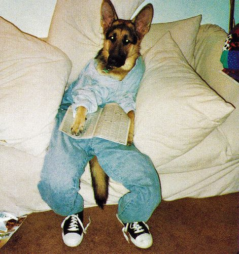 Best Dogs Wearing Clothes