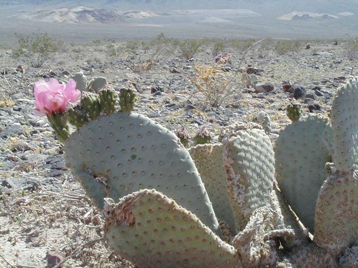 Desert Flower - Sök på Google