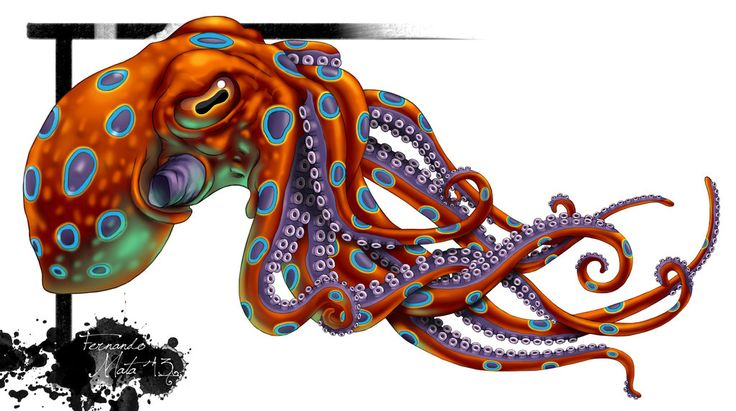 Realistic Octopus Tattoo Photo : Tattoo meaning