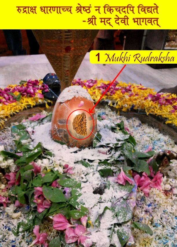 Om Namah Shivay ONE MUKHI RUDRAKSHA: Benefits: One mukhi Rudraksha is regarded as the most auspicious Rudraksha blessed by Lord Shiva. see more: http://www.rudralife.com/rudraksha_beads_1-MUKHI-RUDRAKSHA.html