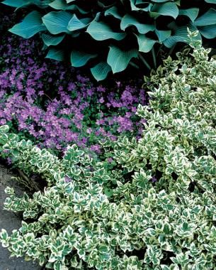 The Only Shrubs You Need to Grow | Fine Gardening