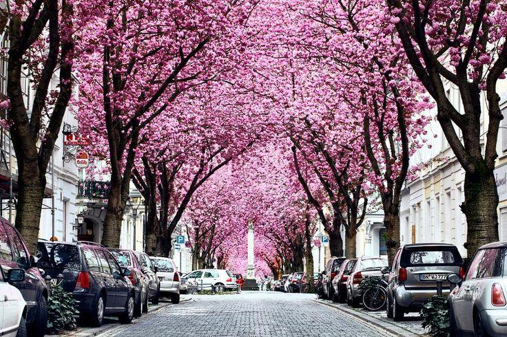 """72 Beğenme, 5 Yorum - Instagram'da Täglich ein Wort (@taglicheinwort): """"Biraz da sevilen yerlerden bahsedelim Heerstraße #Bonn bu güzel görüntüye ev sahipliği yapıyor. 🌸…"""""""