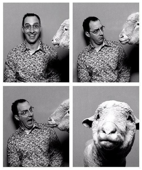 Arrested Development - sheep photobomb with Buster Bluth