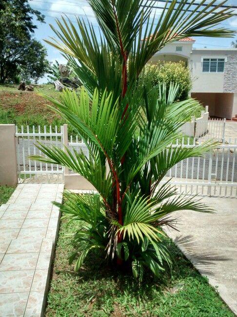 36 best images about jardin para mi esposita on pinterest for Athos palma jardin