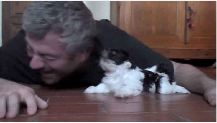[Vídeo] Fotógrafo Francês e minúsculo Shih Tzu são incansáveis na brincadeira.