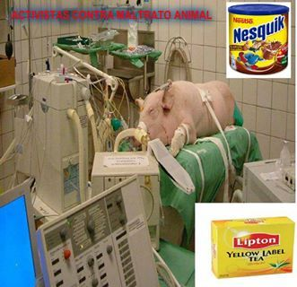 Experiments of Nestle WHAT THE ACTUAL FUCK ARE THEY TESTING????!! IF YOU WONT TEST IT ON YOURSELF DONT FUCKING TEST IT ON AN ANIMAL!!!