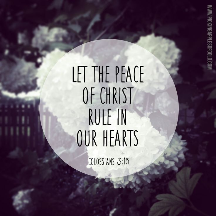 Colossians 3:15 // Peace  See more at www.pickingapplesofgold.com