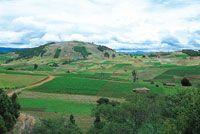 Cultivos de papa en el suroccidente de la laguna de Tota.
