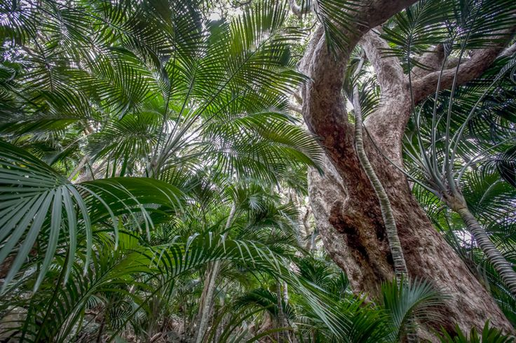 Forest on Mt Gower | Lord Howe Island