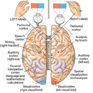 Understanding parts of the brain in relationship to midline. It's important for