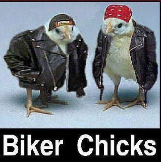 ChicksGo Girls, Funny Pics, Funny Stuff, Families Photos, Bikes Riding, Biker Chicks, Funny Commercials, Rai Chicken, Funny Memes