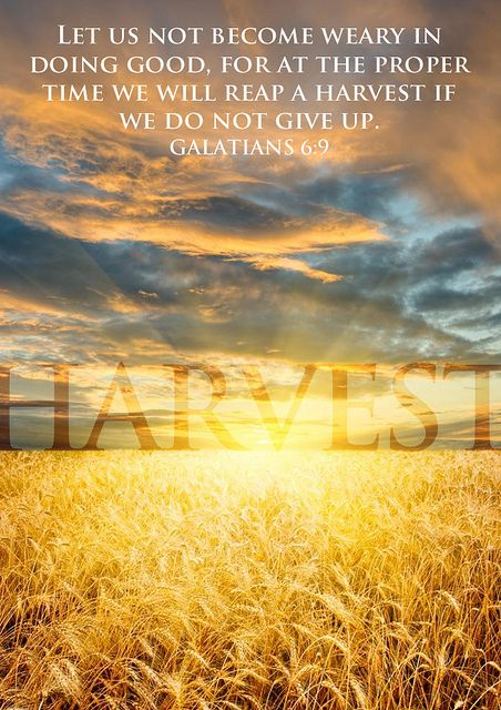 """And let us not be weary in well doing: for in due season we shall reap, if we faint not."" Galatians 6:9"