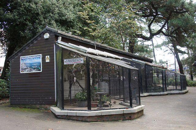 Bournemouth aviary #bird #Bournemouth #Dorset #animal #nature #aviary #outdoors