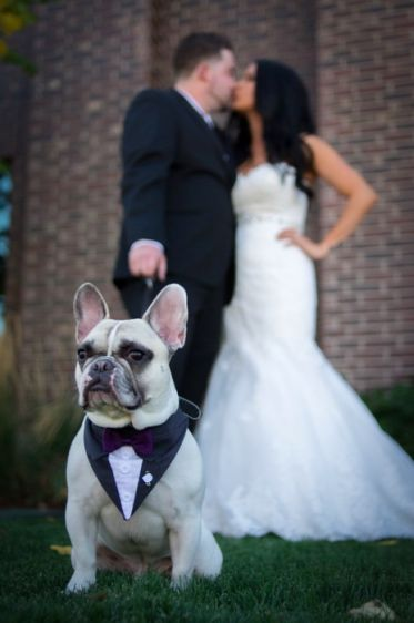 Featured Photographer: All Digital Photography; Adorable French bulldog in wedding