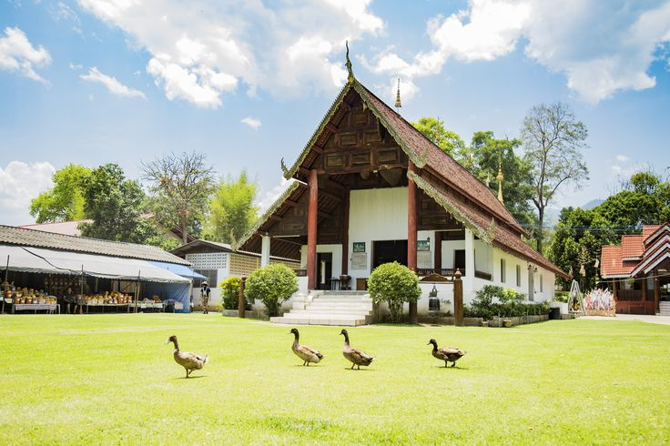 Ducks parade in Pai, Thailand  2017