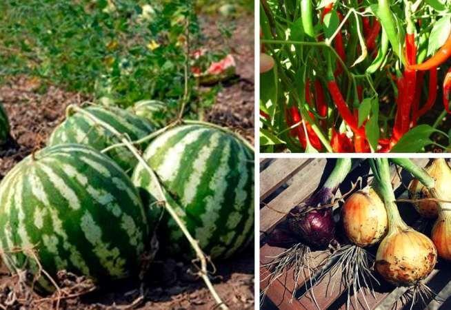 Cuál Es El Mejor Momento Para Cosechar Tus Cultivos De Verano Cosas Del Jardin Como Hacer Un Huerto Huerto Huerto Organico