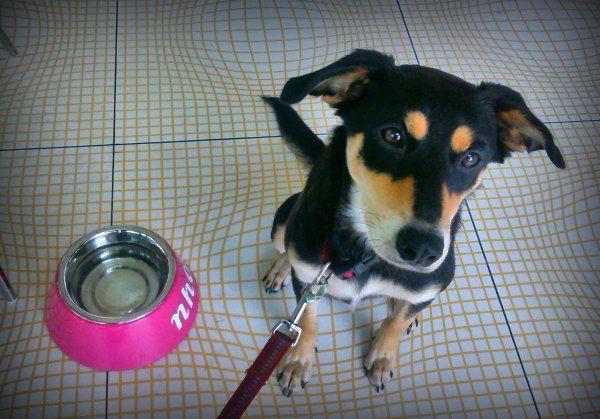 Viele Hunde sind verwöhnt, aber was braucht ein Hund wirklich? Eine Prioritätenliste...