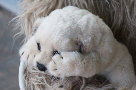 Полярный белый медведь. По Цыбина Natali - Bear Pile