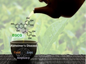 Green Tea Extract Interferes With the Formation of Amyloid Plaques in Alzheimer's Disease  Mar. 5, 2013 — Researchers at the University of Michigan have found a new potential benefit of a molecule in green tea: preventing the misfolding of specific proteins in the brain.