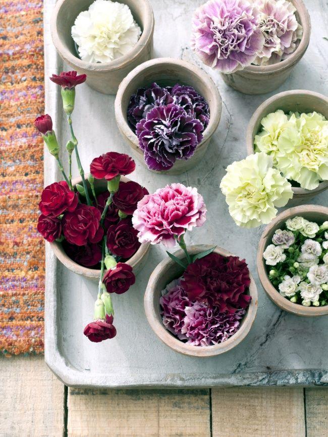 #Nelken sind immer süß, in kombination mit anderen Blumen.. aber auch nur in einer Vase!