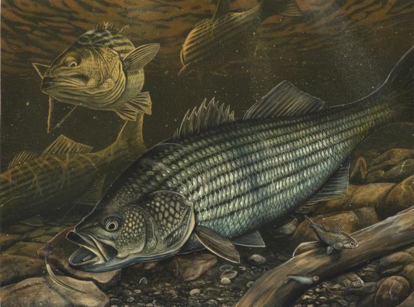 2665 pinterest for Big fish screen printing
