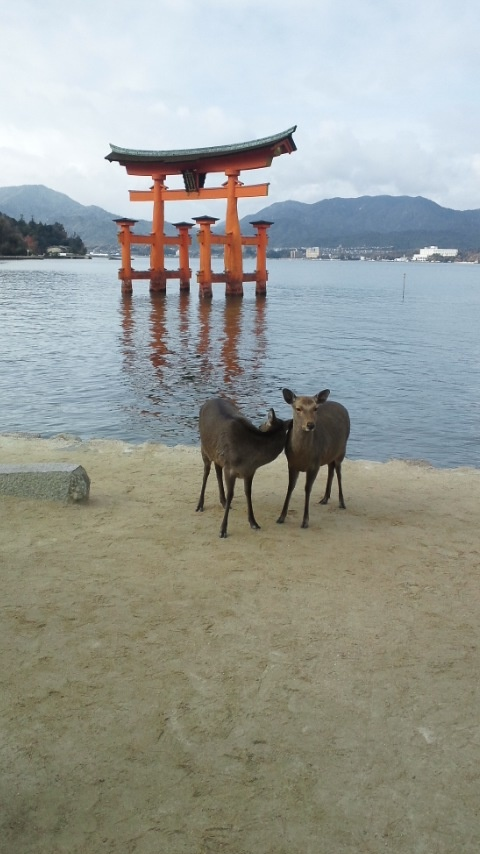 Otorii&Deer