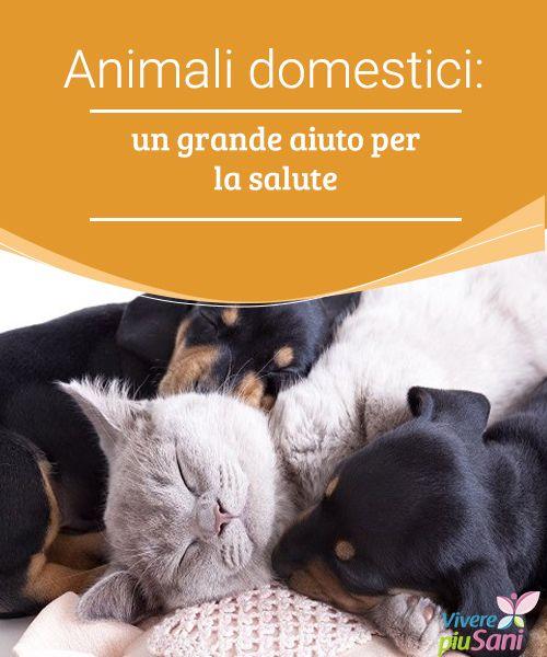 Animali domestici: un grande aiuto per la salute   Gli animali domestici sono un aiuto per la nostra salute.