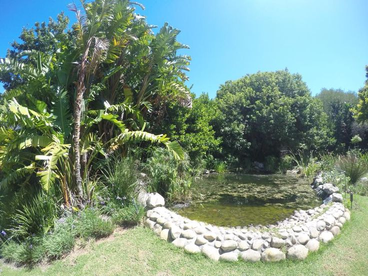 Pond Clean up in Constantia