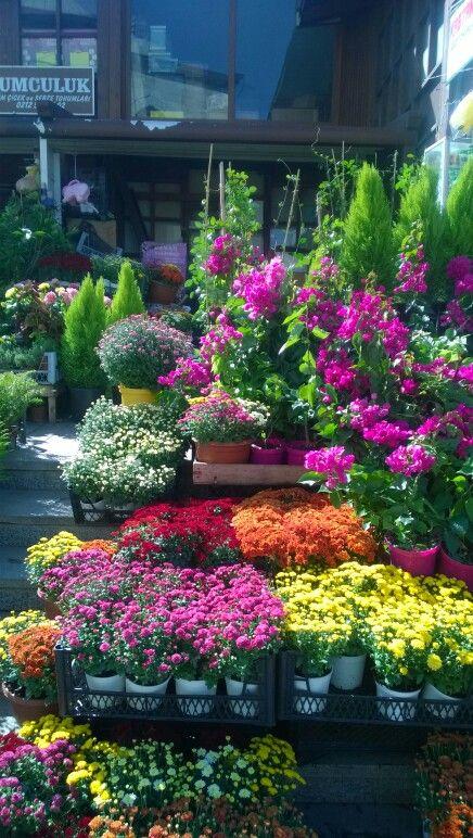 İstanbul /Eminönü /çiçek pazarında sonbahar çiçekleri /hem güzeller hem de güzel kokuyorlar /rengarenk kasımpatları /iyi ki bu şehirde doğdum ,yaşıyorumAutumn flowers from Istanbul /flower bazaar.. /chrysanthemums are so colorful and they smell nice! ⛅