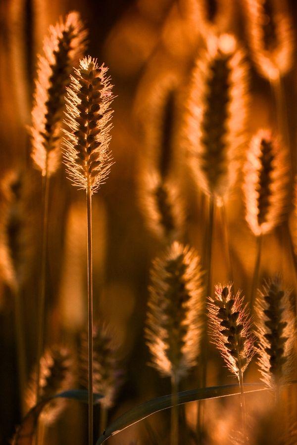 Autumn casts its golden glow.
