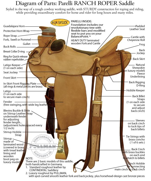 Diagram of Western saddle parts. | Saddles, bridles, tack ...