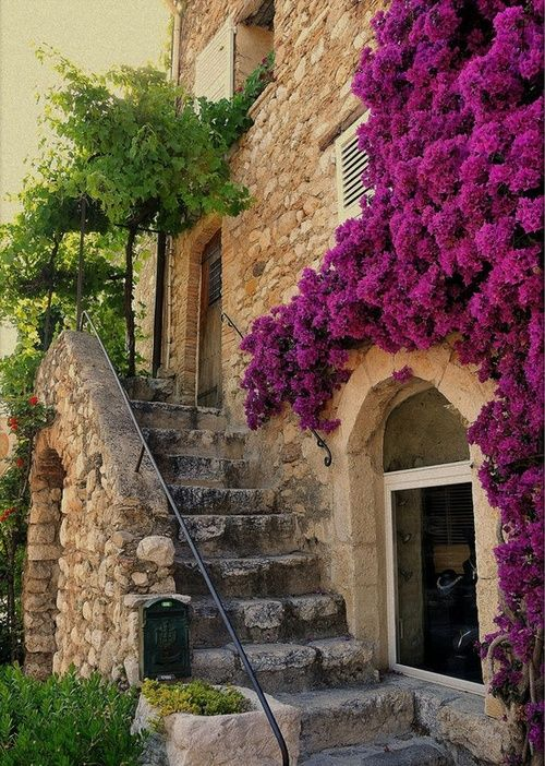 Flowers covering the wall, Provence, France