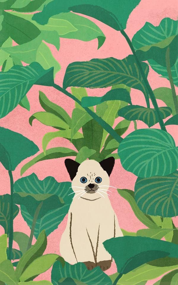시간 날때마다 화분을 들여다 보는 자연주의 고양이   ⓒ 최지예 gogokoala