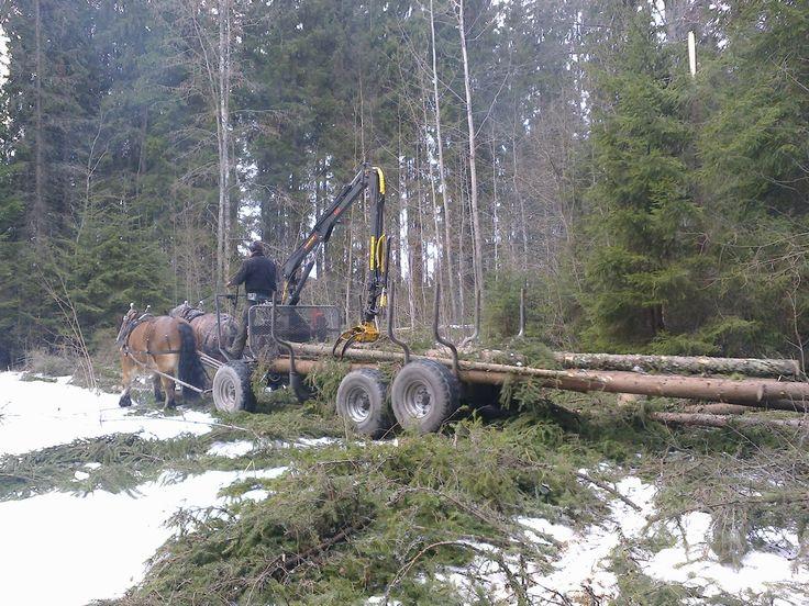 Harmaa torppa: Tutustumista työhevosiin metsätöissä