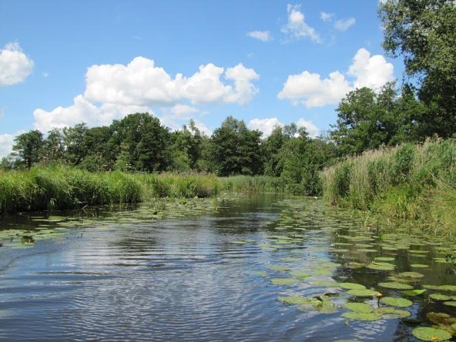 Geniet van open water, uitgestrekte rietlanden, hooilanden vol bloemen en dichtbegroeide moerasbossen in Nationaal Park Weerribben-Wieden.