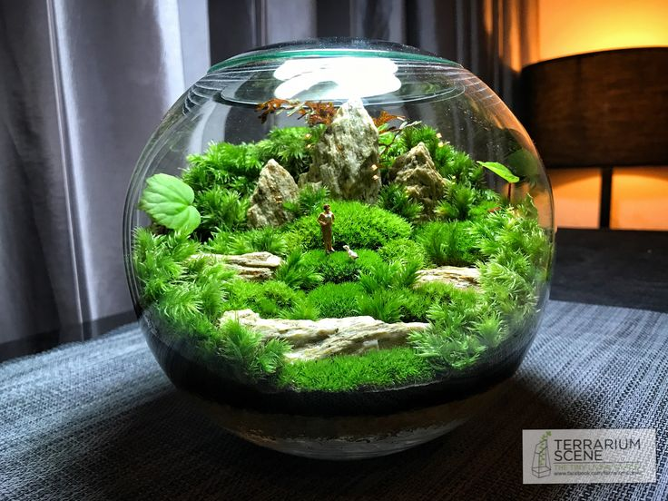 die besten 25 terrarium pour tortue ideen auf pinterest. Black Bedroom Furniture Sets. Home Design Ideas