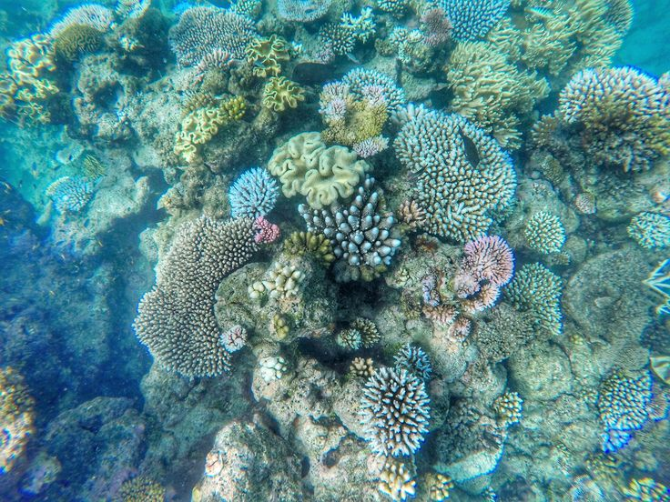The Great Barrier Reef 🏊🏼♀️🐠  Cairns, Snorkeling, Australia, Snorkeling at The Great Barrier Reef